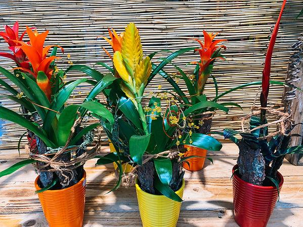 Blumenladen_Regenstauf-8.jpg