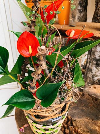 Blumenladen_Regenstauf-11.jpg