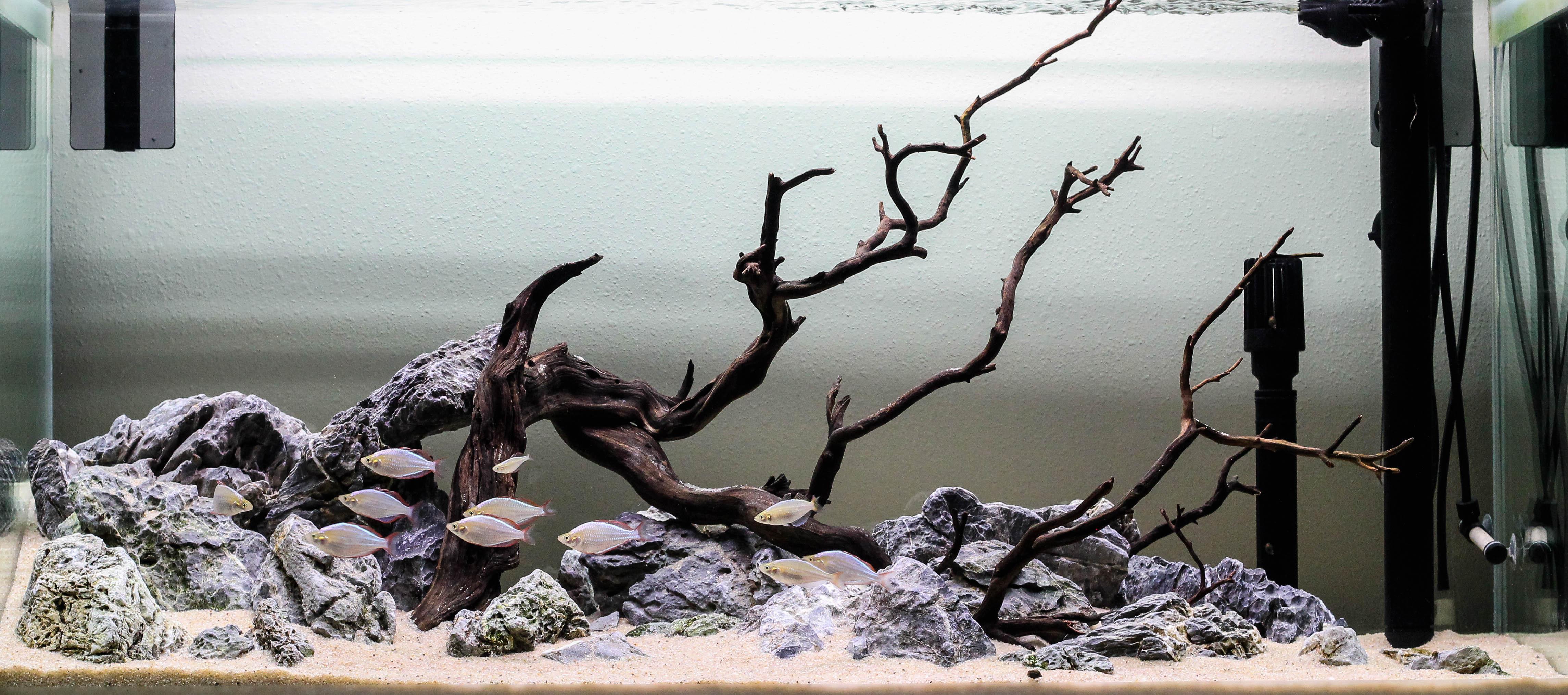 Rock And Wood Aquascape