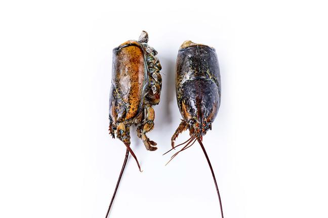 Têtes de homard canadien