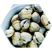 coquillages.png