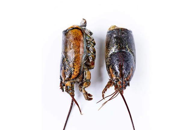 Têtes de homard bleu