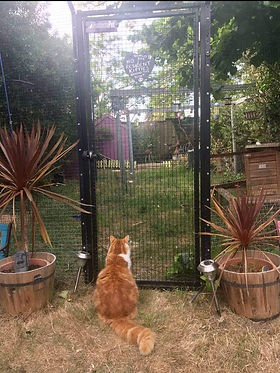 Ginger cat in garden with gate.jpeg