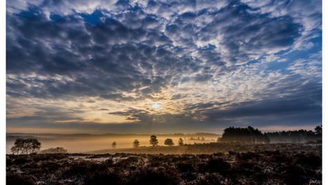 The Golden Mist of Dawn