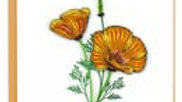 Yellow Poppies Quilling Card