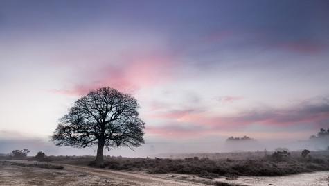 Alone-on-the-heath