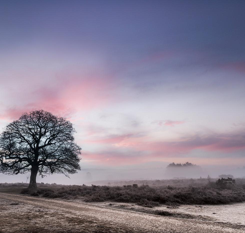 Alone-on-the-heath-