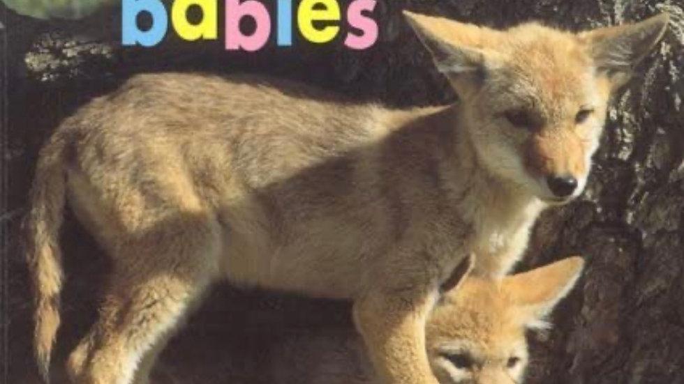 Desert Babies