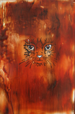 Orange Cat / Cath Oren