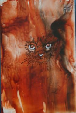 Red Cat / Cath goch