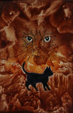 Cath Ambr / Amber Cat