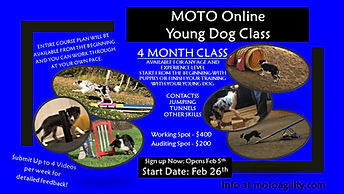 - Online Young Dog Poster 2021.jpg