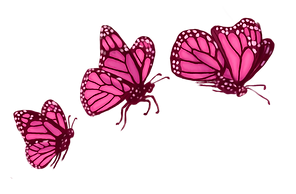 Butterflys_edited.png