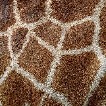 giraffe hide-hd.jpg