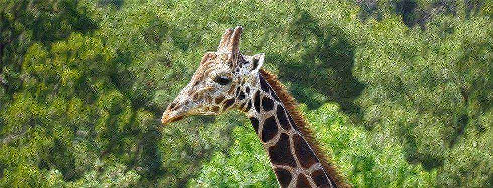 Zane's Giraffe Oil.jpg