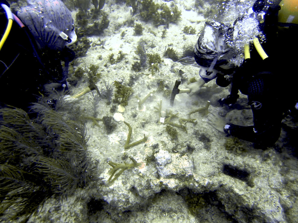 Jessica and Edwin Plating Coral