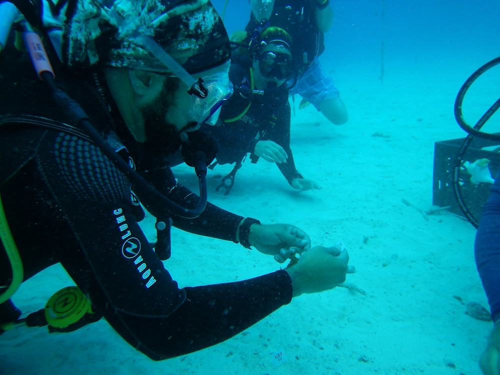 Edwin Tagging Coral