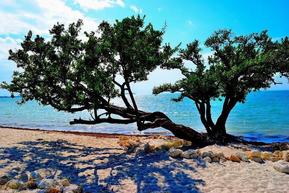 "Hobie Island Beach ""Tree of Life"""