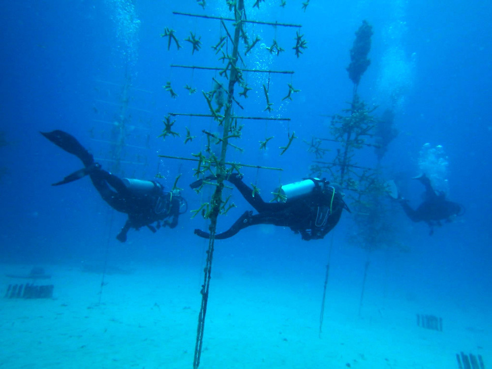"""Aidan, 11, Student: """"I really enjoyed learning the process of replanting coral. Seeing the coral trees in person and all the fish enjoying them was definitely my favorite part."""""""