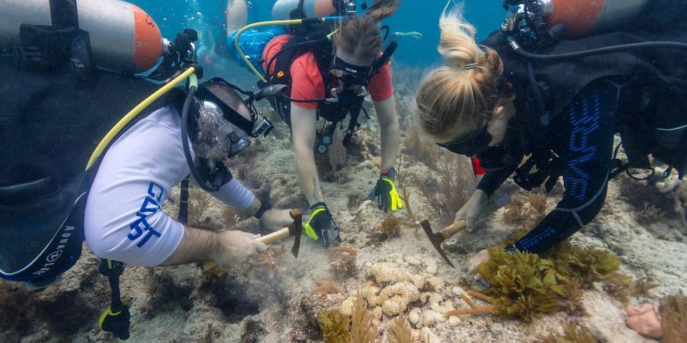 Coralpalooza 2019