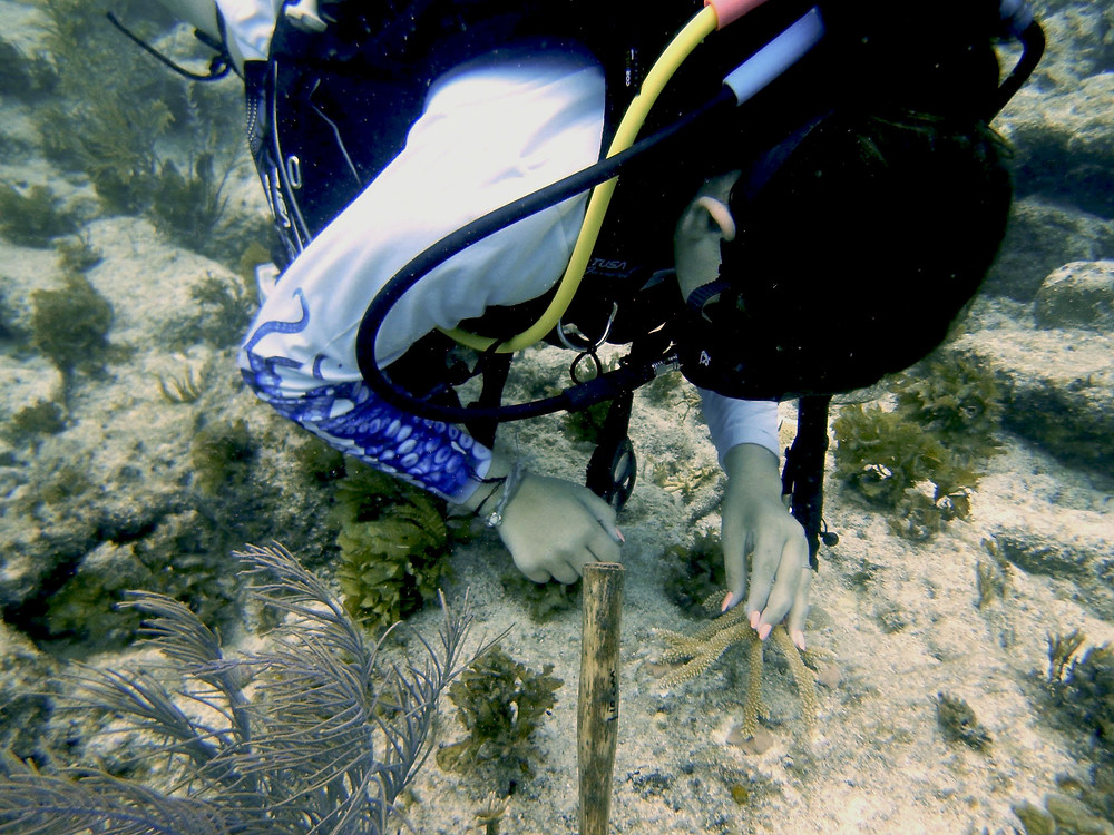 """Kayla, 13, Student, """"This weekend was super fun, we got to scuba dive and see fish and nurse sharks. One of them came right up to me. We also got to plant coral and see nursery for them as well."""""""