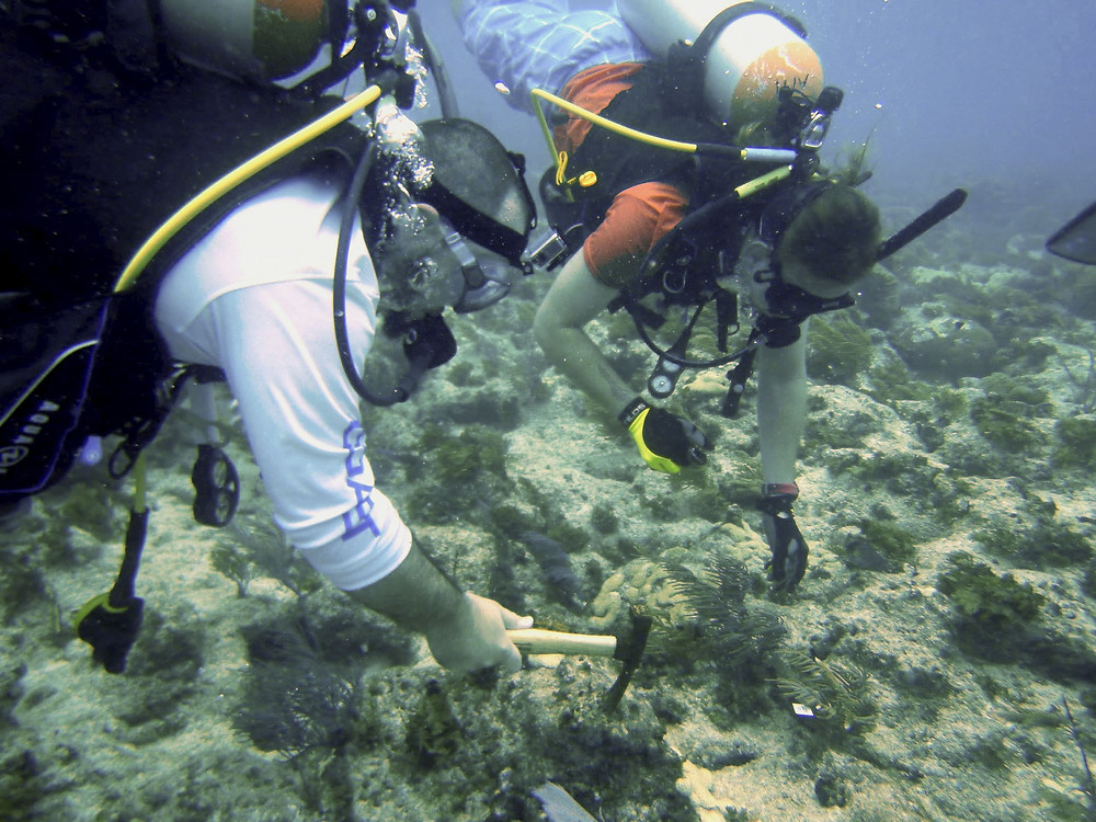 Chris and Daniel Planting Coral