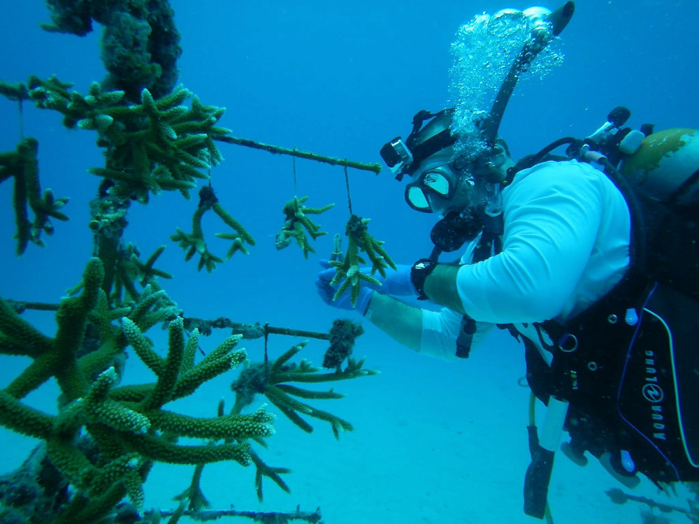 """Chris, Marine Biology Teacher, Father of Lily: """"Being able to assist in coral restoration efforts with family and friends brought us great joy and awesome memories, and we look forward to future events!"""""""