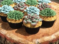 Succulent cupcakes 1