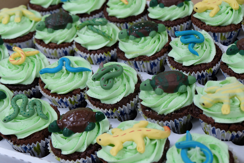 Reptile Cupcakes