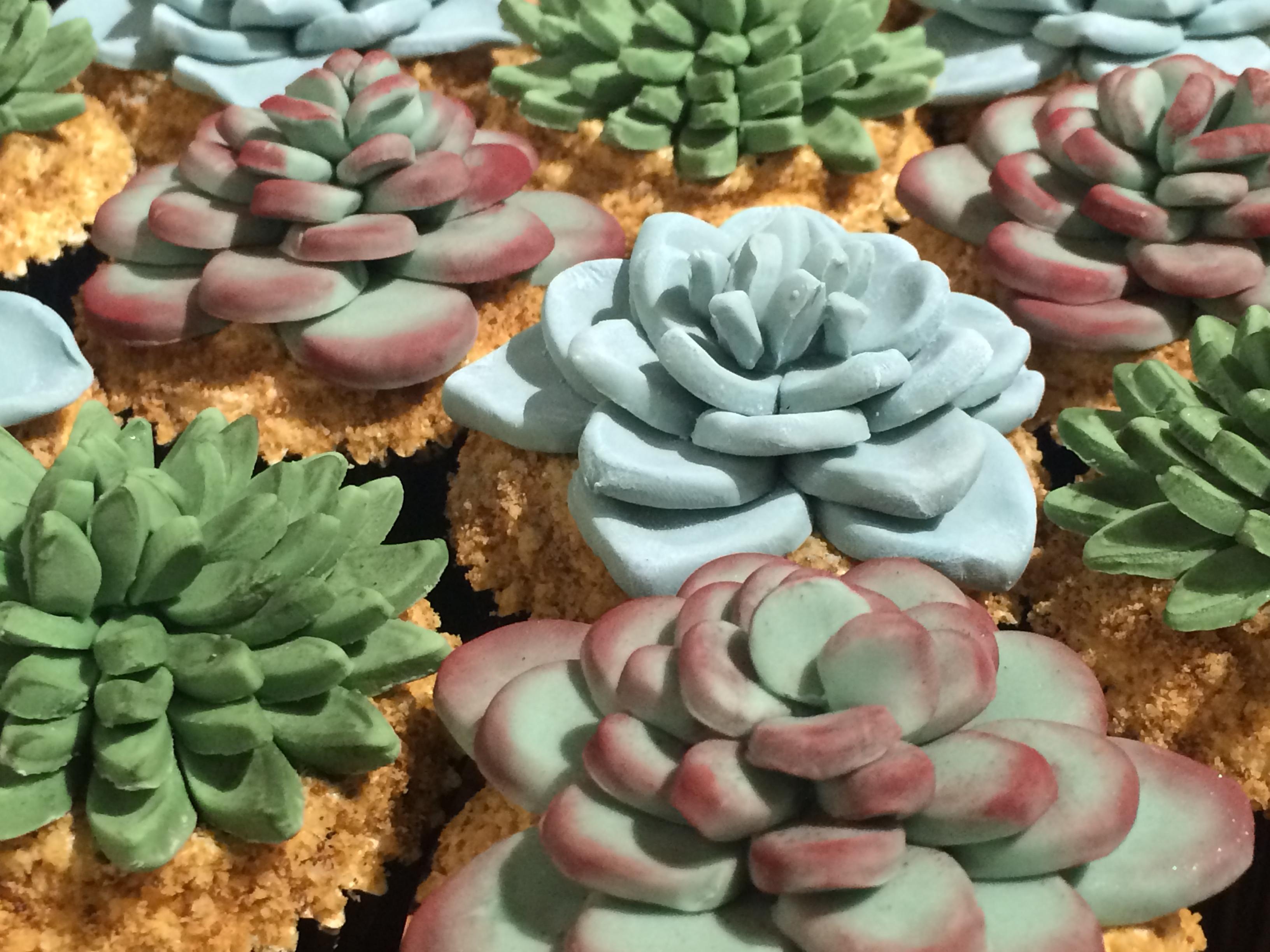 Succulent Cupcakes 5