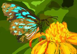 cello 4 vlinder beeld