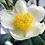 Thumbnail: Manuka Honey Nourishing Body Butter 70g