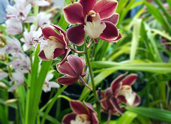 orchid  flowers at HBK Ltd