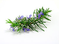 SERENITY ROSEMARY ORGANIC ESSENTIAL OIL 15 ml