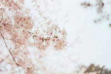 pexels-photo-1023953.jpeg