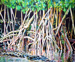 Mangrove Gator.lr.jpg