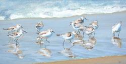 """""""Sandpipers"""""""