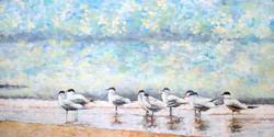 """""""Terns On The Beach"""""""