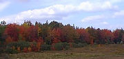 a19 - Autumn Colours at the Camp.JPG