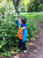 Looking at changes in the woods and comparing heights