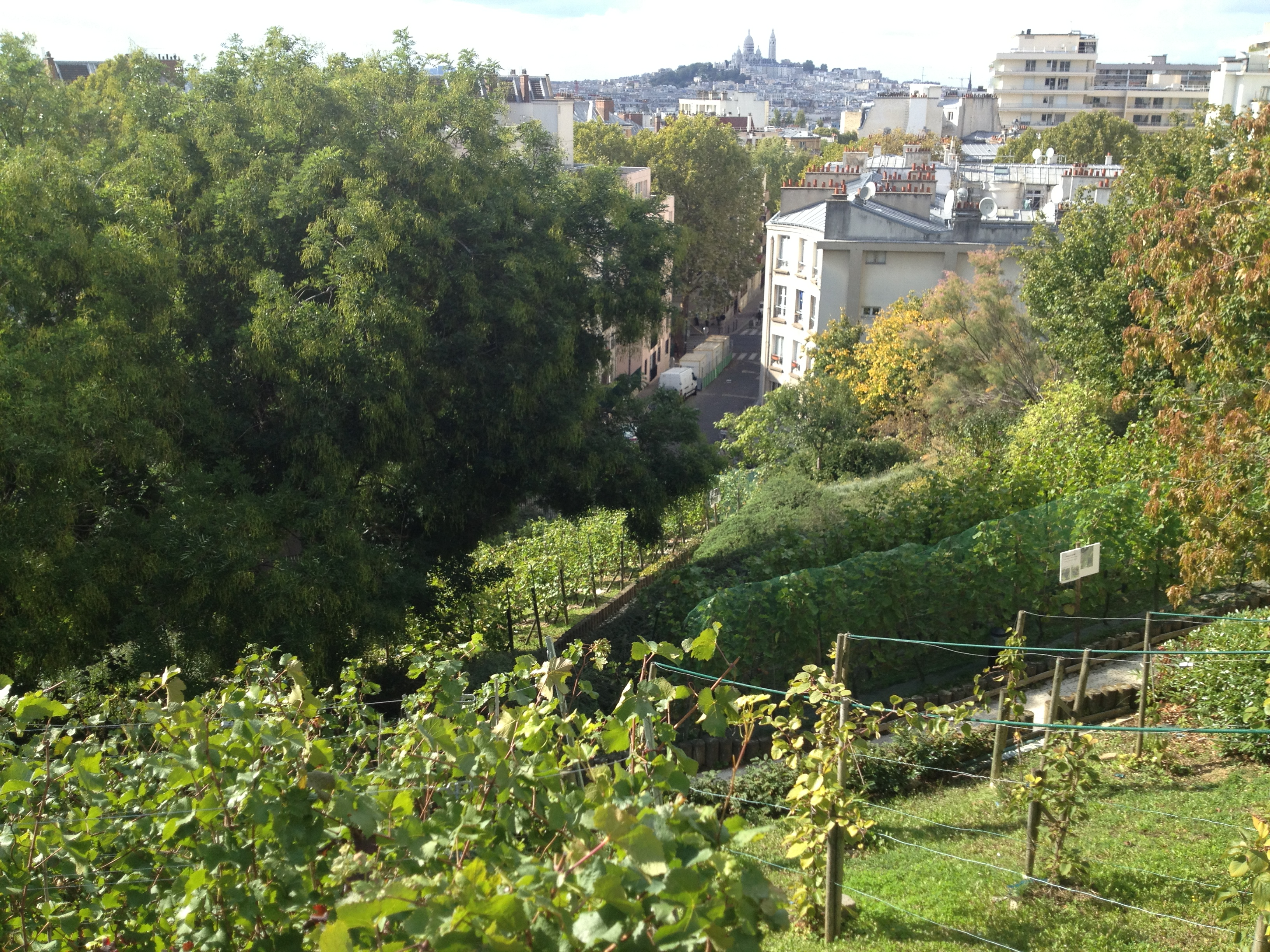 Paris wine secret vineyards