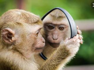 """لماذا لا تثق إناث القردة في """"ذكورها""""؟"""