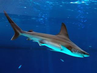 حقائق مذهلة عن أسماك القرش...