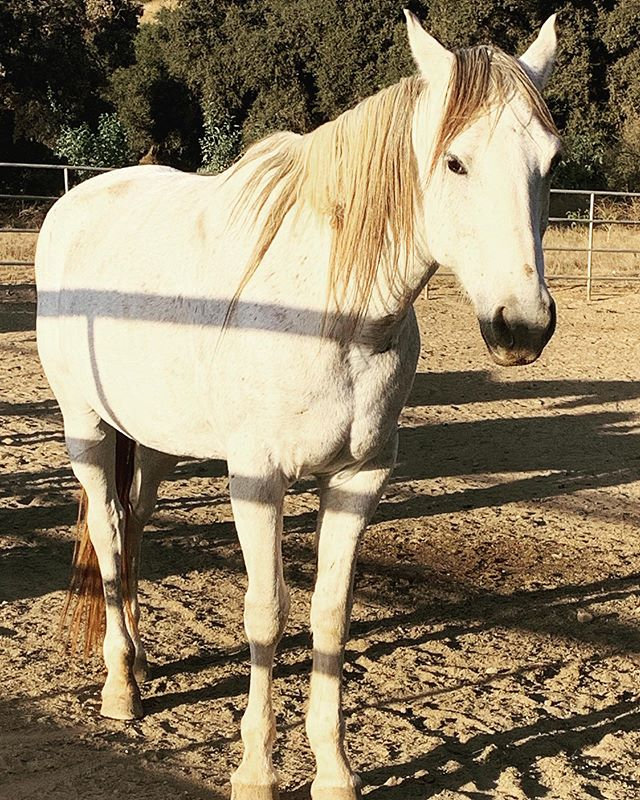 One of our beautiful Domestic Equine res