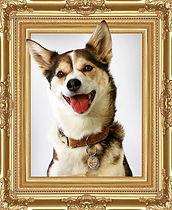 dog_frame.jpg