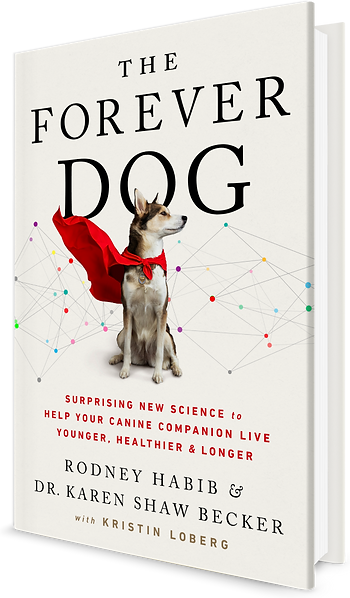 The-Forever-Dog-cover (2).png
