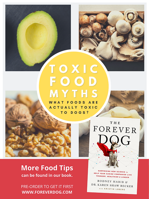 More Food Tips can be found in our book. PRE-ORDER TO GET IT FIRST WWW.FOREVERDOG.COM.png