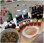foraging for teas and preserving berries