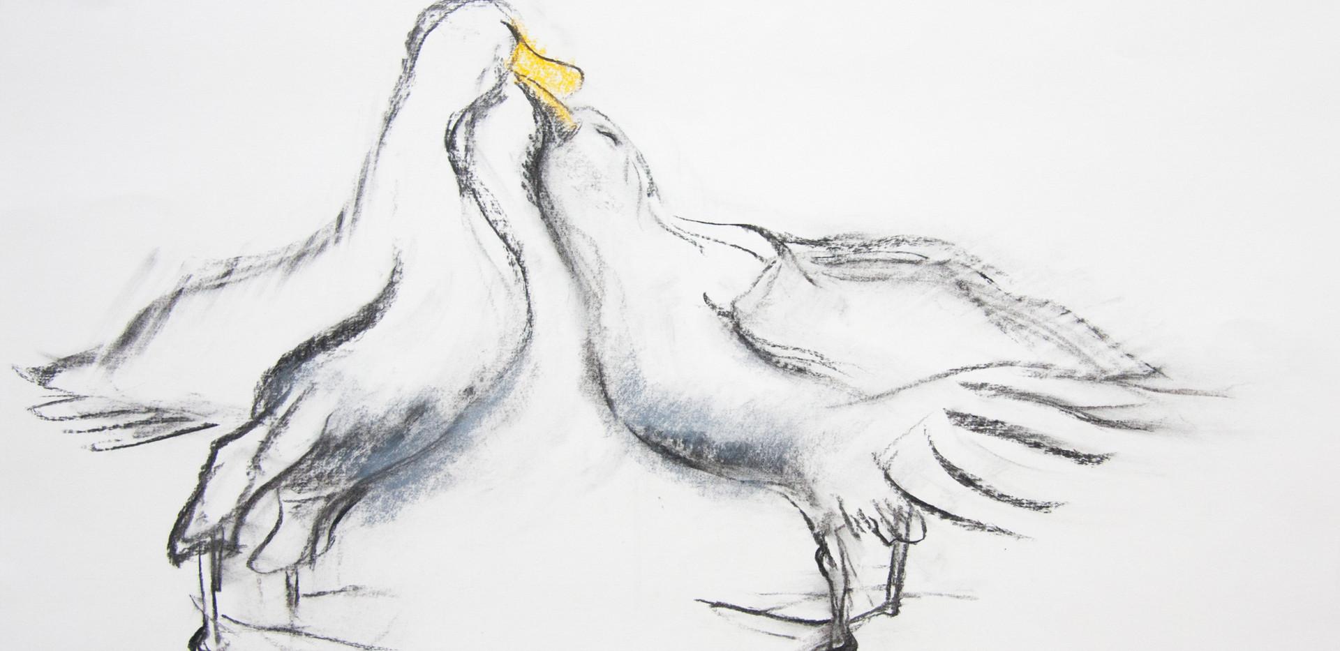 Albatross Love Birds