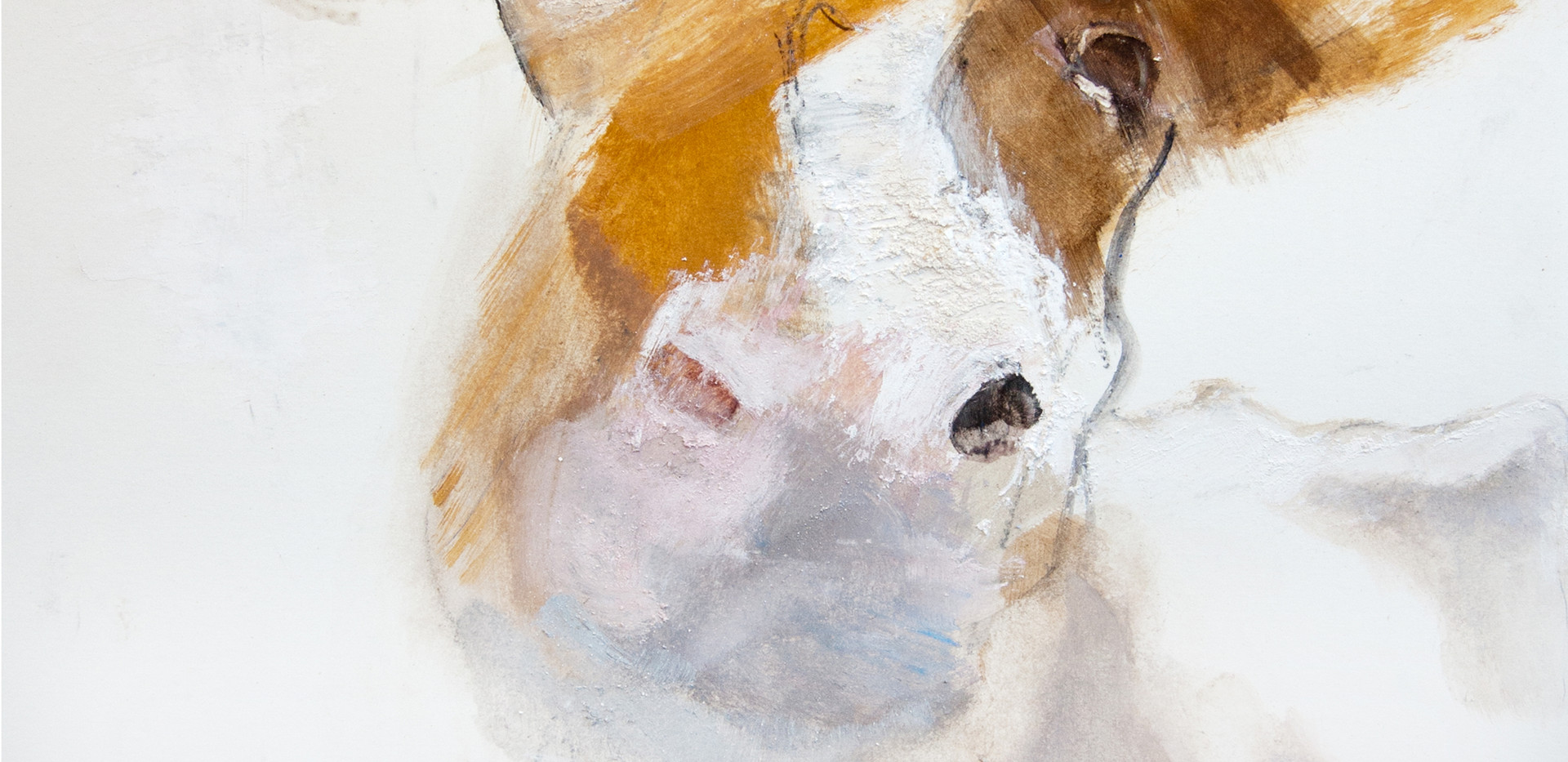 cowcolour.jpg